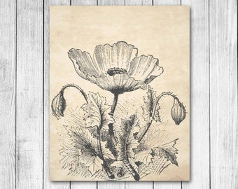 Vintage Parchment Poppy Flower Pencil Drawing Floral Illustration Reproduction Digital Art Print