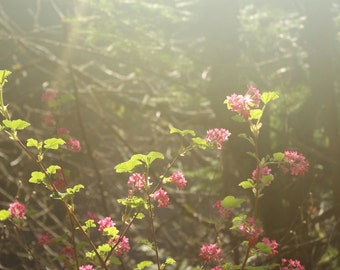 Sunlight and Floral Photograph