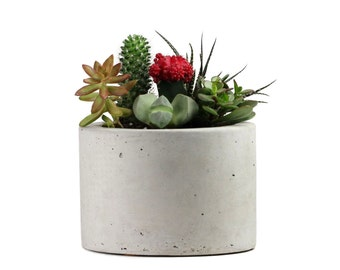 Round Concrete Planter 8""