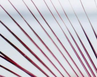 Fuchsia & Pale Blue Wall Decor-Palmetto Palm-Coastal Art-Abstract Nature-Tropical Decor-Fine Art Photography-Vertical-30x45-Gray-Magenta