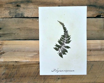Japanese Painted Fern Real Pressed Botanical