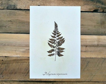 Real Pressed Japanese Painted Fern
