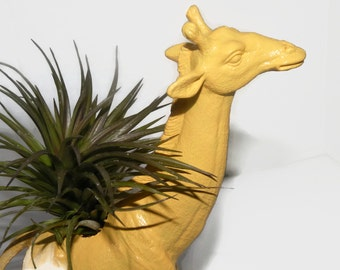Yellow Giraffe planter with air plant.  Unusual home decor house plant.