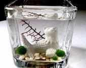 Live Marimo Balls and MerCat Katfish Cat Mermaid Single Terrarium #1