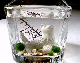 Live Marimo Balls and MerCat Katfish Cat Mermaid Single Terrarium #1