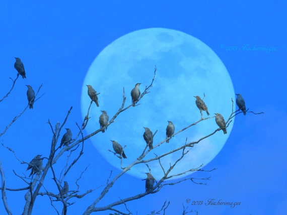 Starling Birds Silhouette Against Huge Moon Nature Wall Art Home Decor Digital Download Fine Art Photograpy