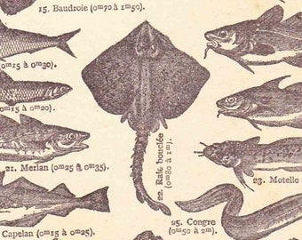 Beautiful Antique Print Encylopedia Page 1920s Engraved Ilustrations French Coast Sea Fish projects scrapbooking, collage