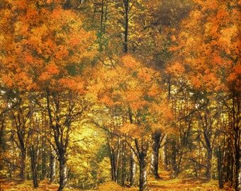 Fabulous Autumn Landscape Print Pure Cotton Fabric--One Yard