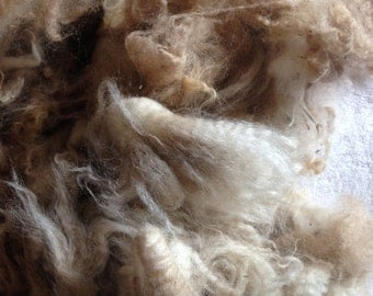 Beige Alpaca Fleece Spinning Fiber from Colorado Ancient Treasures