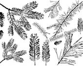 "Rubber Stamp sheet (7x5 inches). ""Pines Fir Yew"", fir twigs and pine branches, great for Christmas cards and tags, Rubber Dance stamp"