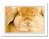 Brown Bunny Note Card with Envelope, Blank Photo Card, Easter Bunny Card, cute animal notecards