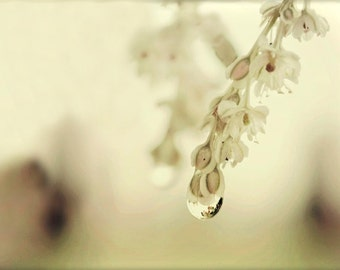 Floral Photography dainty flowers,bisque,raindrop,Gifts under 25,glowing,ivory,elegant home decor,romantic,ethereal,creamy,minimalist