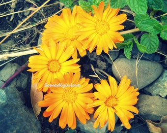 Alphabet Letter c Photograph Digital Flowers Instant Download 5 Photographs
