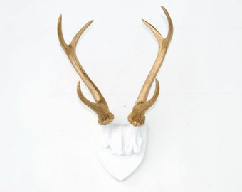 Large Faux Taxidermy Deer Antler Mount - White Plaque With Rich Gold Antlers-  Animal Friendly Wall Art HT0108