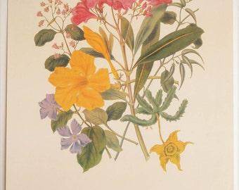 Art Print, Flower Bouquet, Dogsbane Tribe, Botanical Drawing, Art Work, Designer Decor