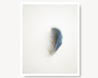 Feather photo, nature photo, nature print, minimalist, blue jay feather, feather photography, feather art print, grey, gray, rustic