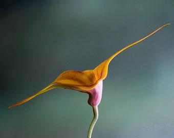 flower photograph orchid photo fine art photography wall decor elegant orange green nature garden art