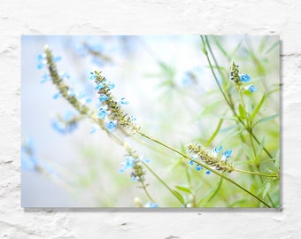 spring flowers photograph fine art photo blue green pastel wall decor baby nursery