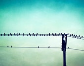 """Bird on Wire Photography - teal aqua turquoise print modern wall art blue green black colorful - 16x20 11x14, 8x10 Photograph, """"Perched"""""""
