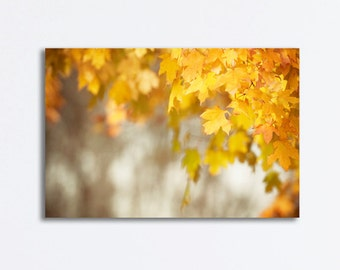 """Autumn Canvas Photography, fall leaves tree yellow gold nature print orange canvas gallery wrap branches wall art, """"Her Hardest Hue to Hold"""""""