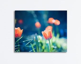 "Tulip Canvas Wrap - dark blue navy coral orange flower canvas gallery wrap nature green floral photography wrapped wall print, ""Vivacious"""