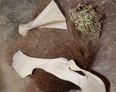 Elen Of The Ways Deer Bundle - shaman druid witch wicca pagan Goddess Elen of the ways