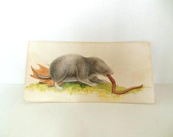 Vintage Mammal Flash Card Color Paper Ephemera Shrew 60's (item 12)