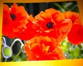 Sale POPPIES Photo POST CARD set of 5 from my photos