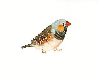 ZEBRA FINCH -7x5inch-Art Print-Bird Watercolor Print-Giclee Print-