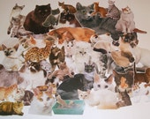 Lot of 40 Cat Book Clippings Images Illustrations Encyclopedia for Scrapbooking Collage Altered Art (Lot 3)
