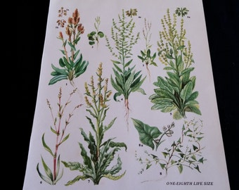 HERBS Vintage Botanical Print Antique, plant print botanical print, bookplate art print, herb plants plant wall print