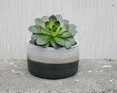 Contemporary rustic ceramic planter, back beige medium size . Cacti Habitat Home decor, urban garden.Custom order waiting list!