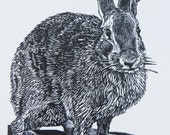 Woodblock print: Mathews Rabbit