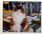 8x10 photography, cat,book store,cape cod,books  RESERVED FOR BETHLEVY7