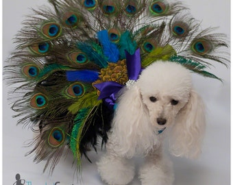 Doggy Peacock Costume - Doggy Costume