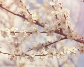 spring photo print - whimsical fine art photography, nature, pretty photo, gifts for her, wall art, home decor, cherry blossom