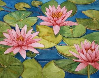 Pink Waterlily Garden 2