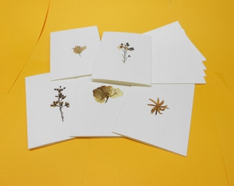 Real Dried Pressed Flower Cards and Envelopes Set of Five (5) on White Card Stock