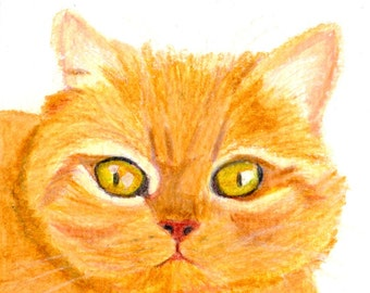 Cat Gift Cards - Ginger British Shorthair Cat - Set of 4