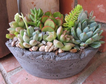 Oval Handcrafted Succulent Arrangement