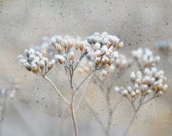 Photography White silver photo dreamy icy herbs meadow fine art photography print LIMITED EDITION  10x12 11x14 8x10 nature photo pastel wall