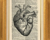 Anotomical Heart No.387B - Printed on Vintage Dictionary Page - BUY 2 GET 1 Free, art print, dictionary page, vintage image, human heart