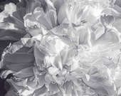 Abstract Peony, Fine Art Photography, Flower Photography, Black and White Photography, Floral Photography