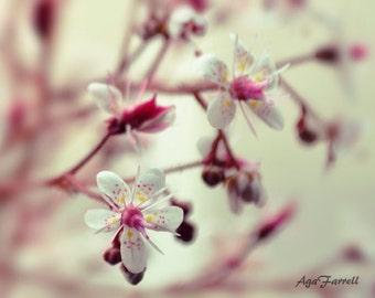Pink Wall Art, Summer Print, Flower Photography, Girls Room Decor, Nature Art, Botanical Print, Mint and Pink, Purple, Girls Room Art
