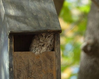 Slot Entrance Squirrel Resistant Screech Owl Box