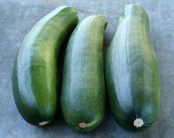 Black Beauty Heirloom Zucchini Summer Squash Seeds Non GMO