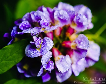 Purple Hyacinth After The Rain, Spring Flower Photos, Purple Flowers, Nature Photography Macro Photography Dramatic Colorful Floral Wall Art
