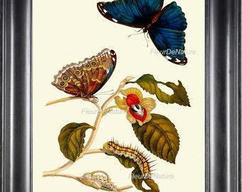 BOTANICAL PRINT Sibylla 8x10 Botanical Art Print 20 Beautiful Blue Butterfly Whimsical Flower Caterpillar Spring Summer Garden Home Decor