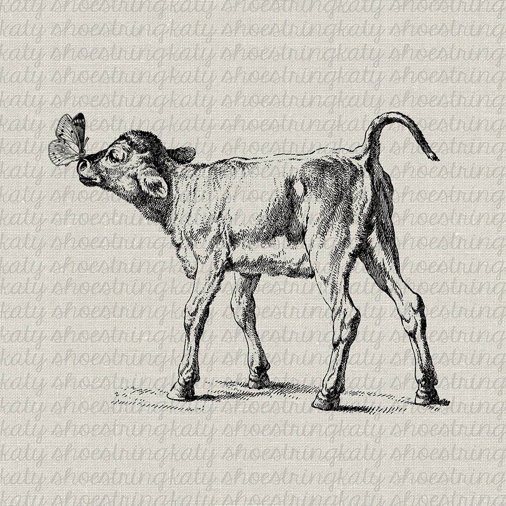 Clip Art Butterfly Baby Calf Cow Digital Download