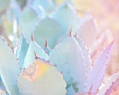 Dreamy Pastel Photography Print - Rainbow Colors, Agave Plant, Cactus - Desert, Sunlight, Summer, Spring Colors, Nursery, Bedroom, Teal Pink